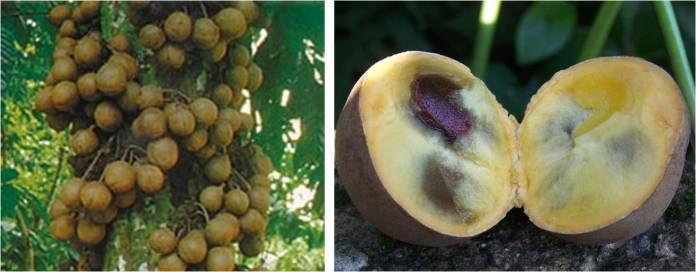 The Fruits You Must Try When Come to Indonesia